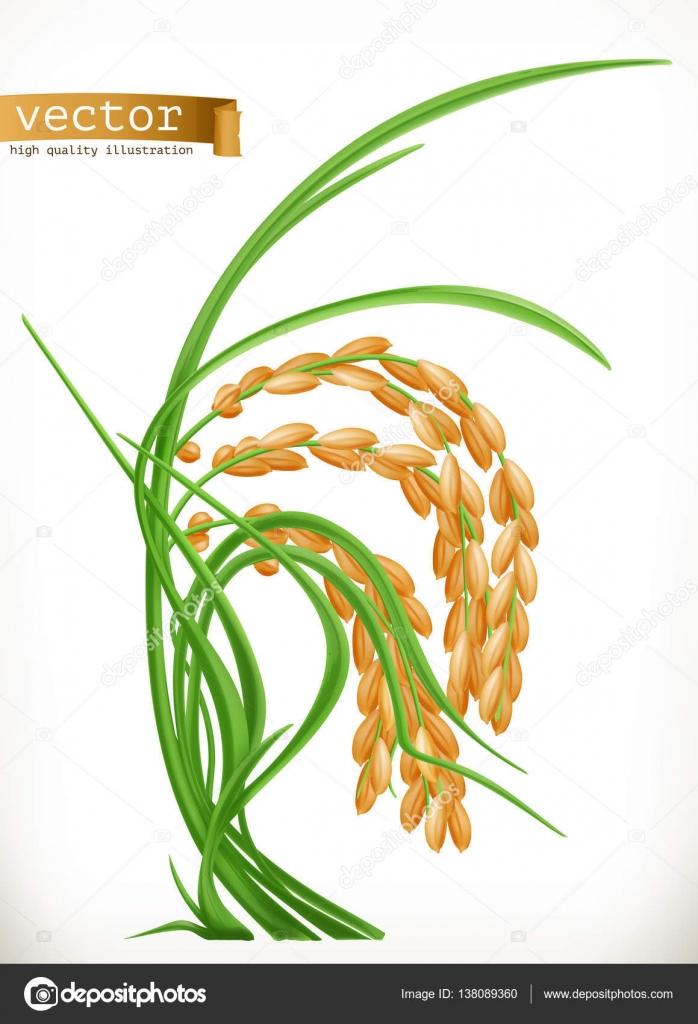 Icono de arroz fresco — Archivo Imágenes Vectoriales © natis76 ...