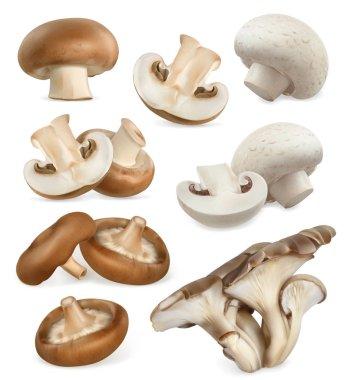 Edible mushrooms icons set