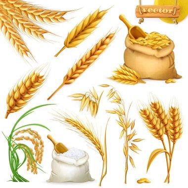 Wheat, barley, oat and rice