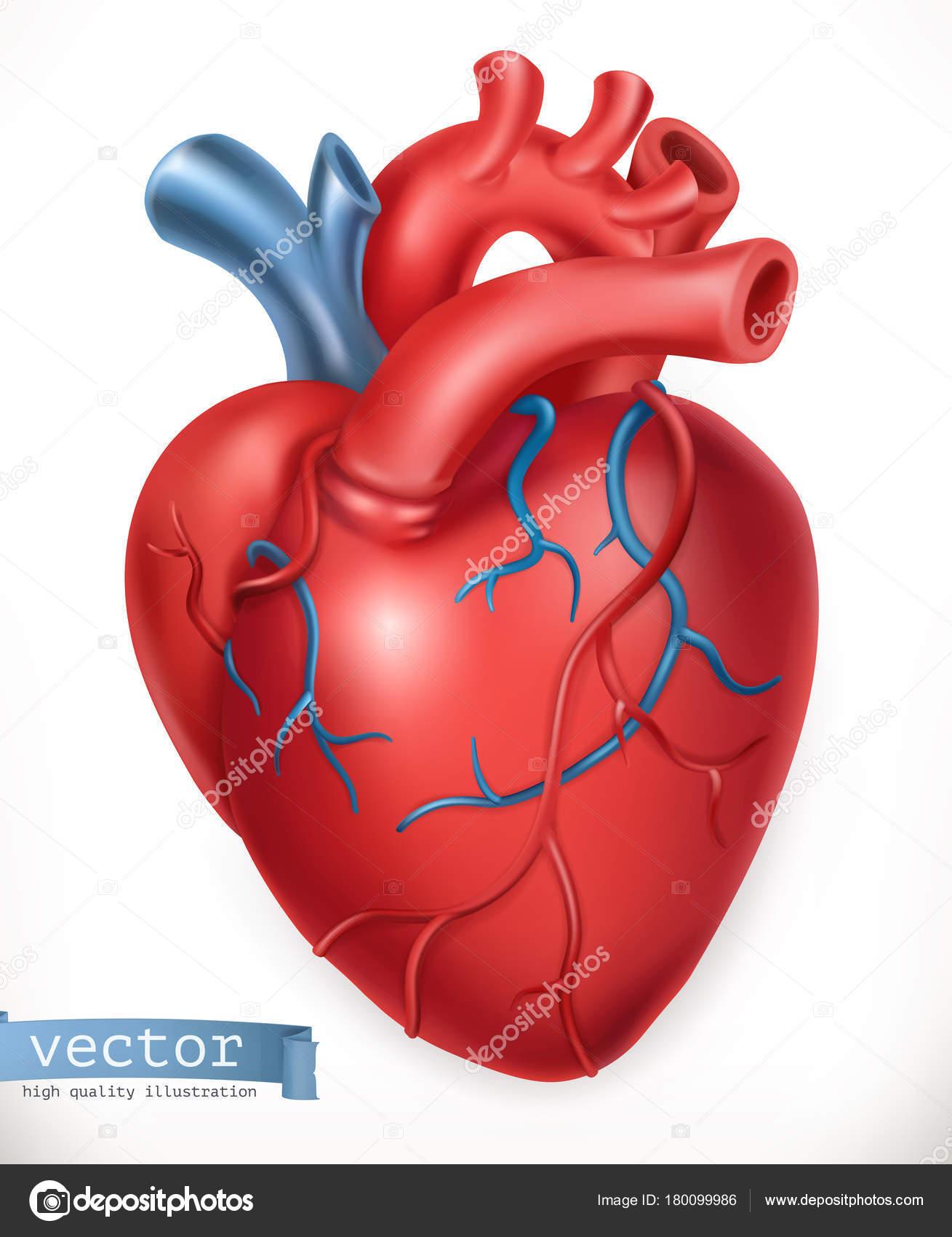 Menschlichen Herzen. Medizin, innere Organe. 3D Vektor icon ...
