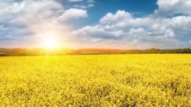 letní krajina s poli řepky