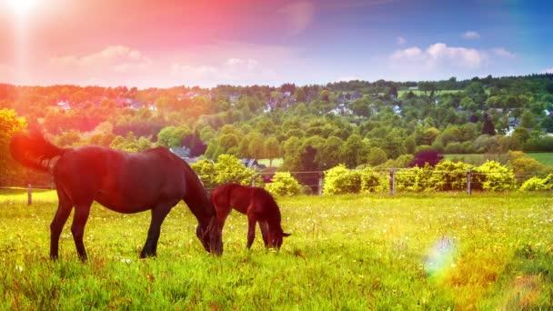 farm lovakkal a mezőgazdasági területen a táj