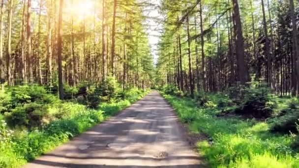 lesní cesta na slunečný letní den