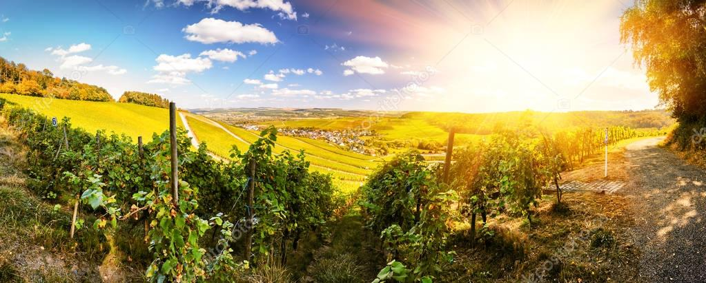 Panoramic landscape with autumn vineyards