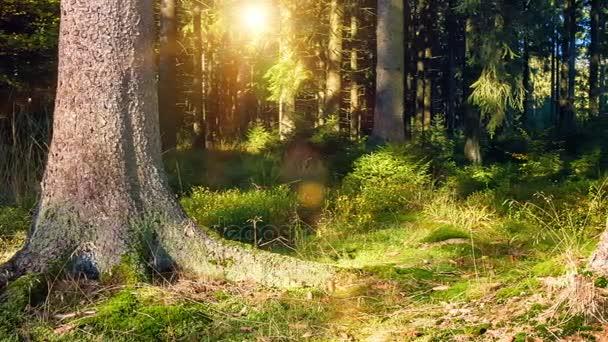 Mattina di sole nel bosco