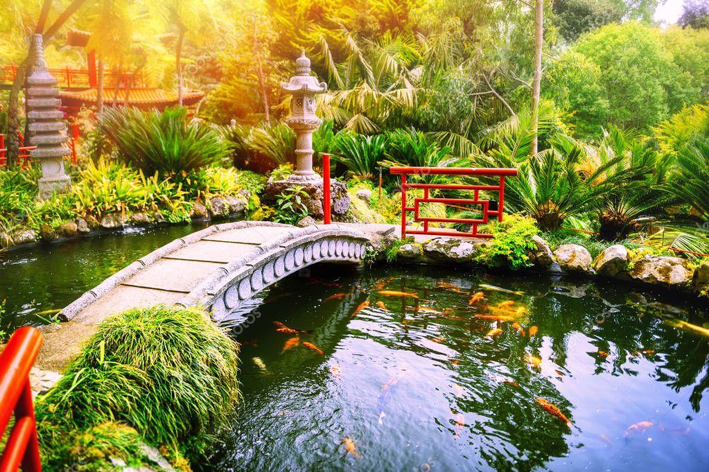 garden with swimming koi fish