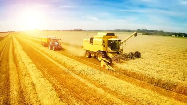 Kombajn a traktor na práci v pšeničné pole