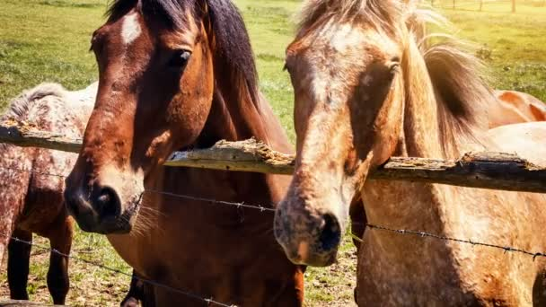 Drei Pferde hinter Zaun