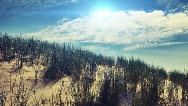 Summer seaside landscape with  dunes.