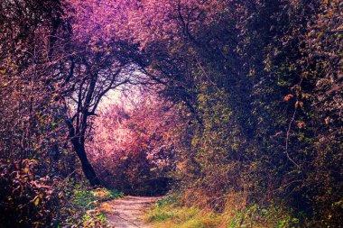 Footpath in magic garden