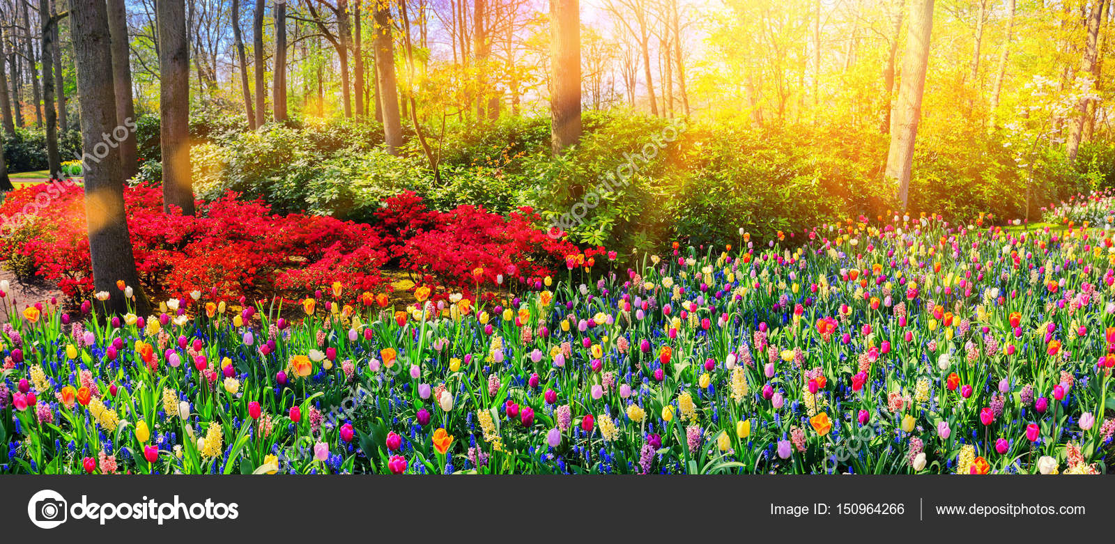 Landscape with beautiful flowers stock photo paulgrecaud 150964266 landscape with beautiful flowers stock photo izmirmasajfo