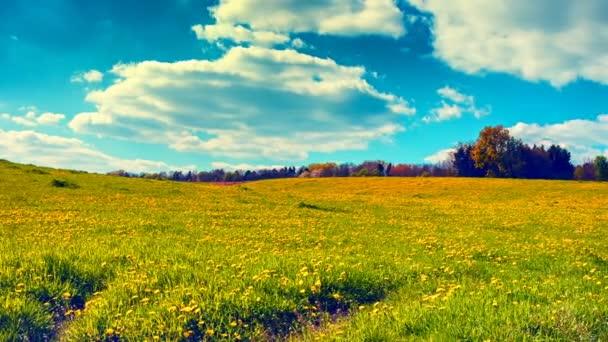 Panoramatický krajinu s pampelišky polem