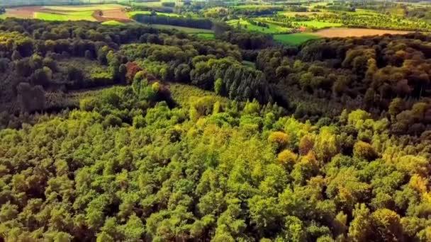 Sommerliche Waldlandschaft