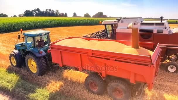kombájn, traktor pótkocsi búzaszem betöltése
