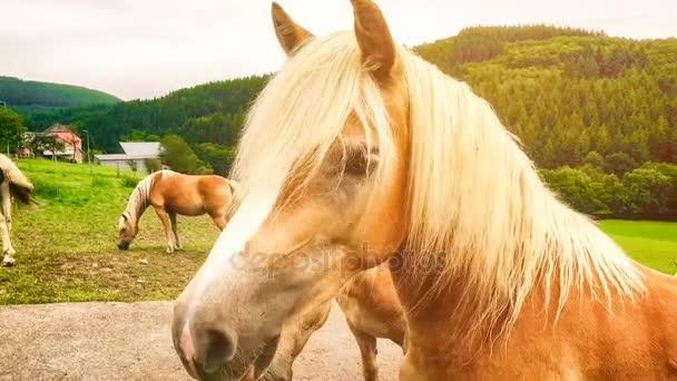 Vértes fiatal lovak, a zöld mezőben. Farm állatok háttér