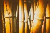 Fotografie Bambus-Hintergrund. Natur und Pflanzen Hintergrund