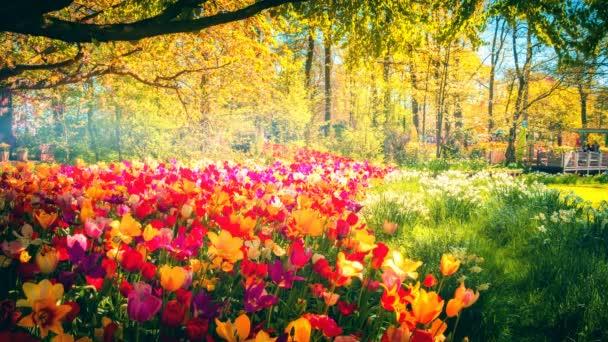 krásné jaro park