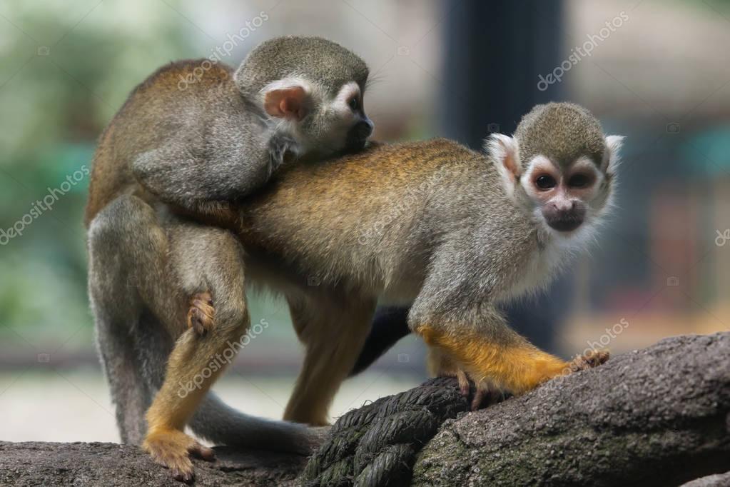 Секс с дикими обезьянами