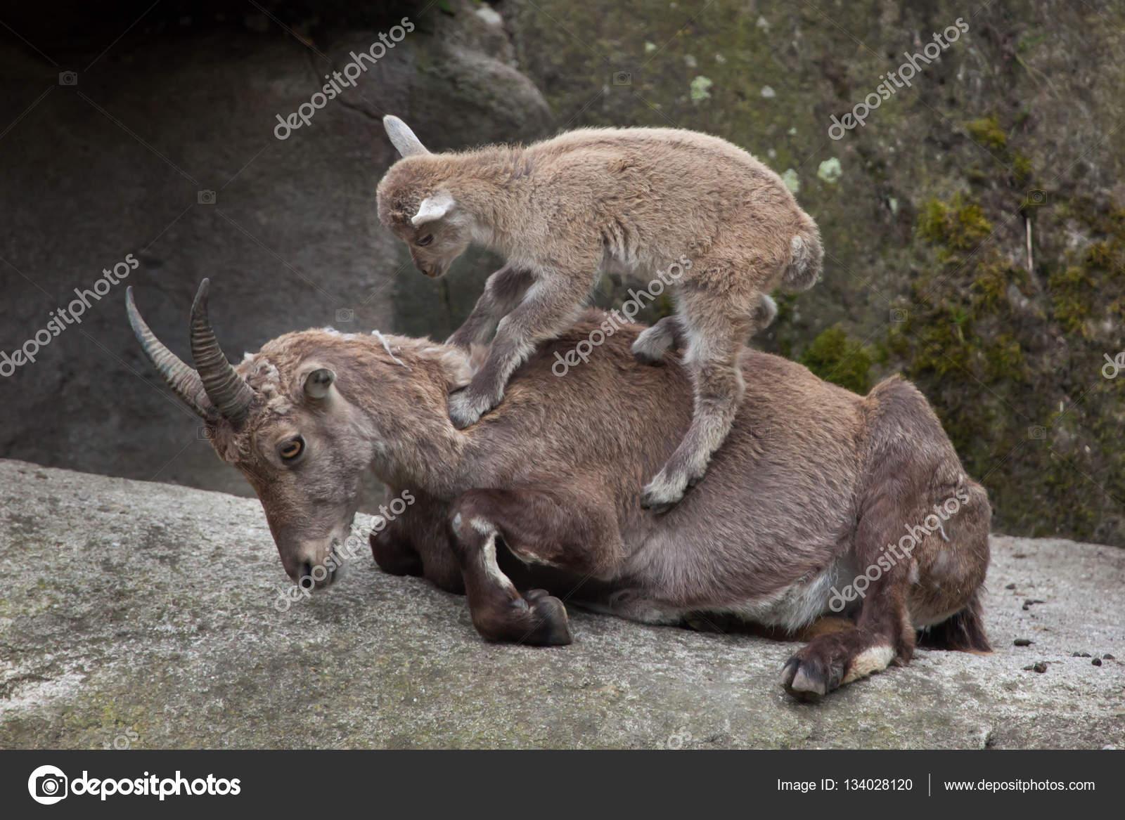 Ibex stock профицит бюджета