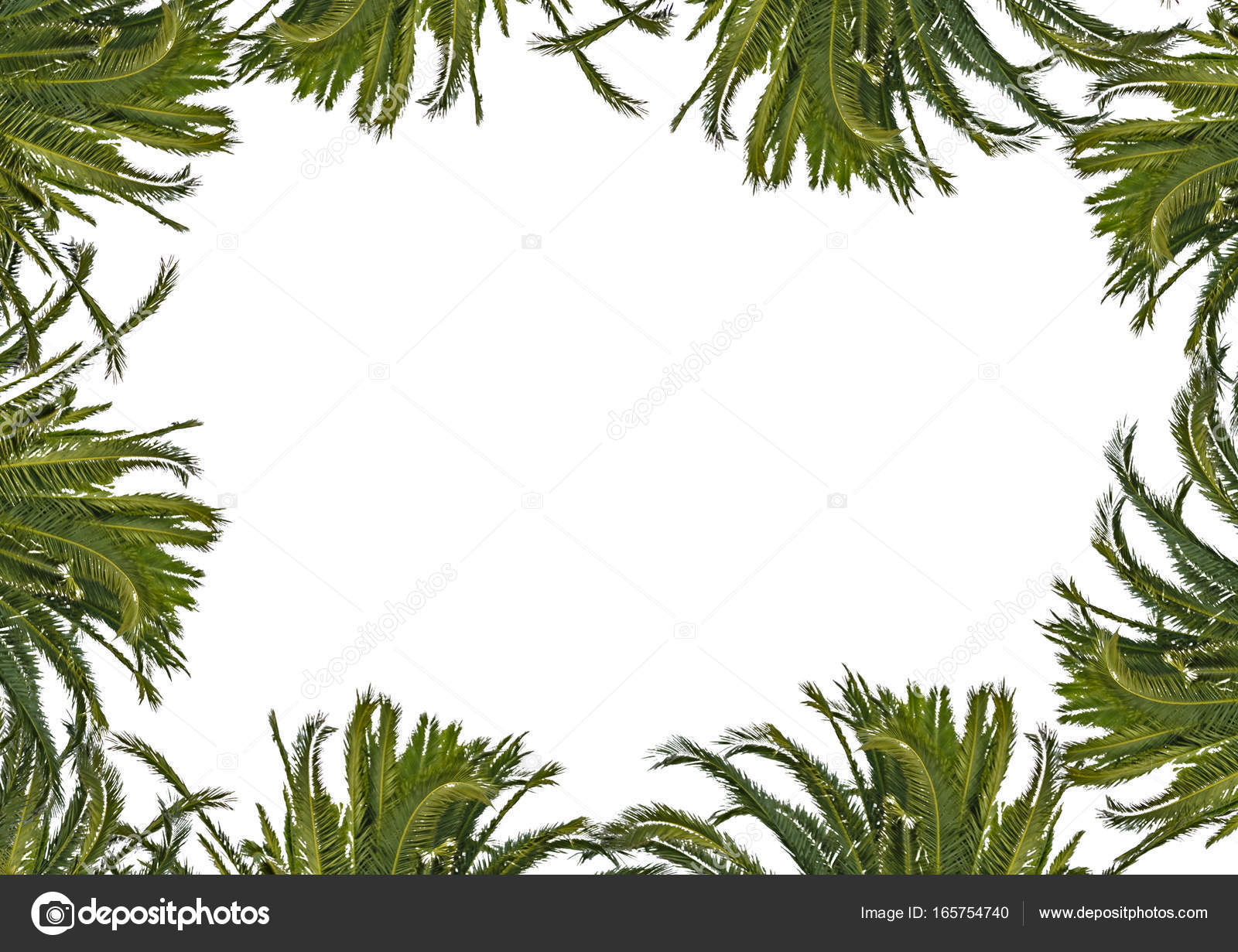 Marco blanco con bordes decorados planta — Fotos de Stock ...