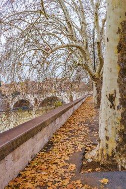 Tiber River Rome Cityscape