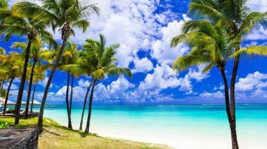 Tropical scenery. Beautiful palm beach with turquoise waters, Mauritius island.