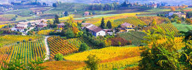 Pictorial countryside and beautiful vineyards of Piemonte in autumn.Italy.