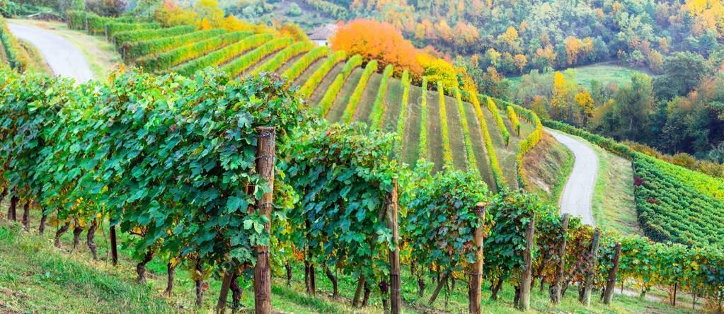 Pictorial vineyards of Piemonte in autumn colors. Italy