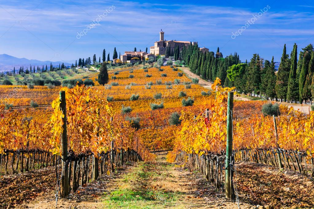 Golden vineyards of Tuscany. Castello di Banfi. Italy
