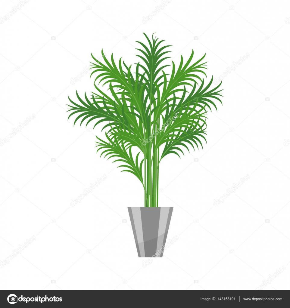 palmier ic ne r aliste de plante maison pour la. Black Bedroom Furniture Sets. Home Design Ideas