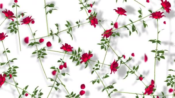 Red Roses On White Background. Rendering floral seamless looping. 3D animation.