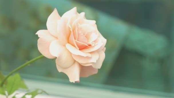 rosa Rose auf grünem Hintergrund