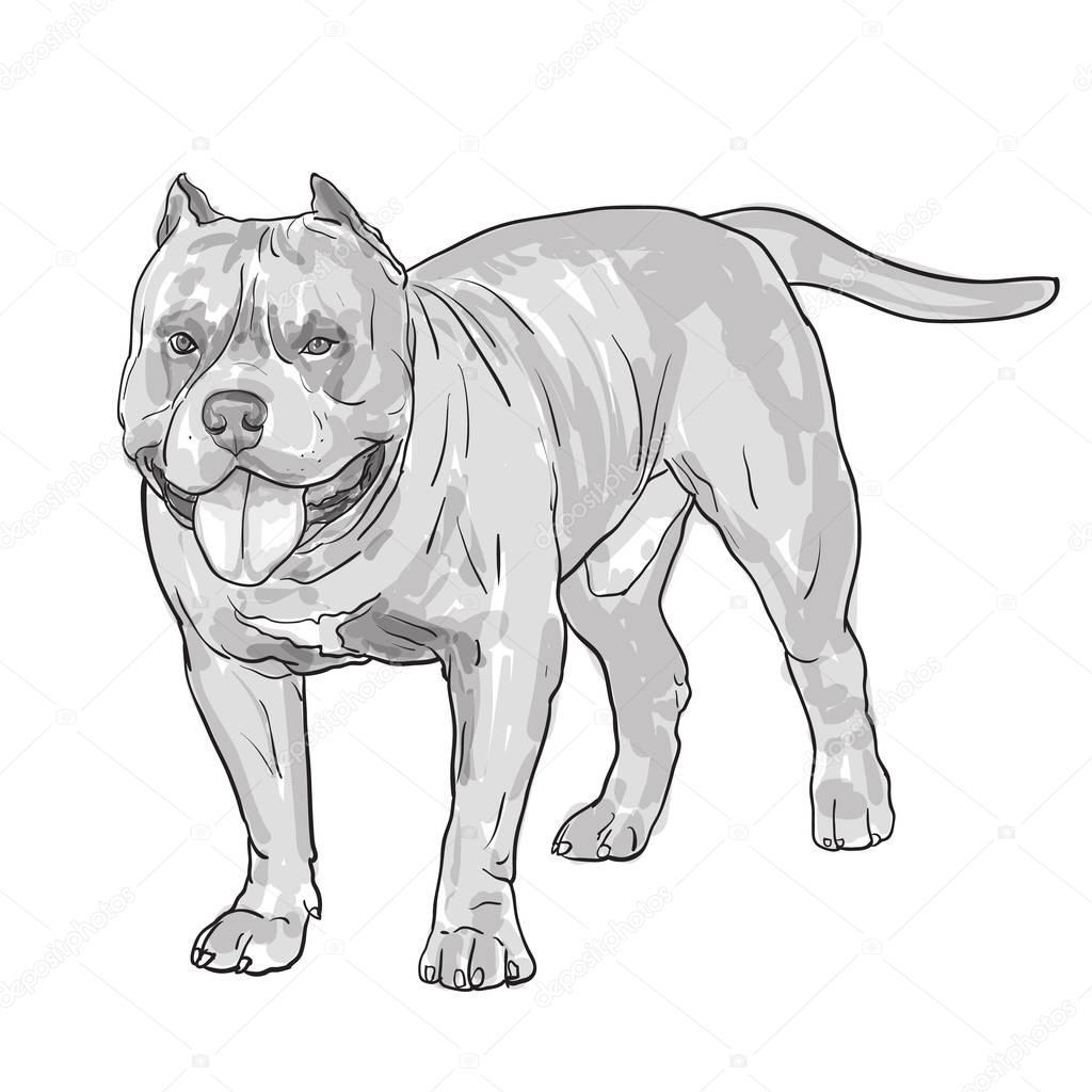 Desenho De Cachorro Pitbull, Isolado No Fundo Branco