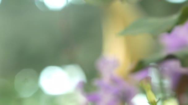 Closeup Mona Lavender flower with defocus of green leaf background,tilt shot