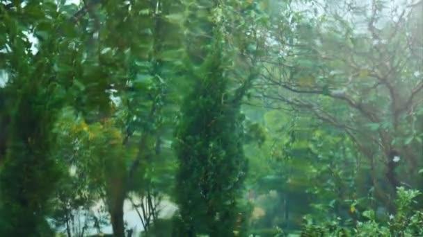 Voda teče na sklo od prší venku, rozmazané zobrazení stromu v zahradě
