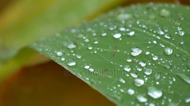 Closeup goccia dacqua da pioggia sul foglio verde