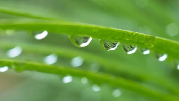 Detailní kapka vody z deště na zelený list