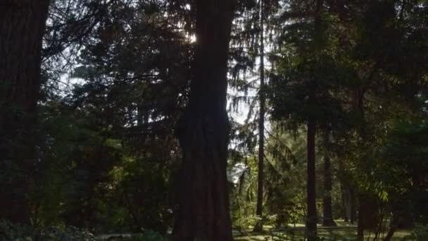 Az erdei séta