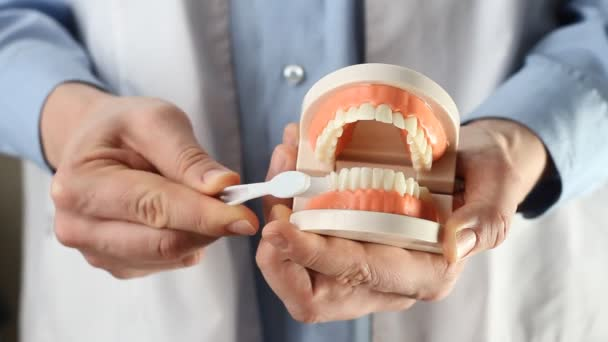 Dentist showing jaw model, giving lesson on proper teeth and oral cavity care. Dentist using jaw mock and toothbrush to teach patient correct cleaning of teeth