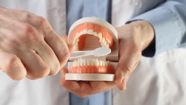 Zubař ukazuje model čelisti, dává lekci o řádných zubech a péči o dutiny ústní. Zubař pomocí čelisti maketa a kartáček na zuby naučit pacienta správné čištění zubů