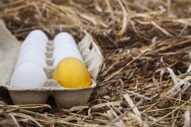 Gold egg with white egg