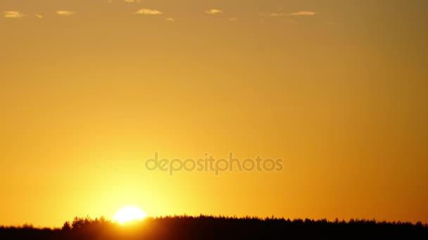 Východ slunce nad březový les brzy na jaře