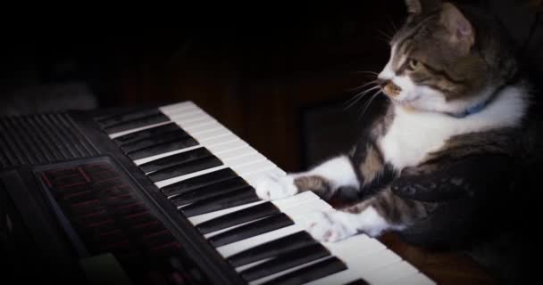 Funny Cat Plays a Keyboard, Organ or Piano