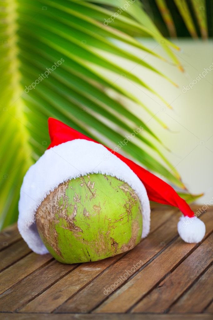 Foto tropicale della noce di cocco in un cappello rosso di Natale e palm  leaves — Foto di annamoskvina 32a5404ba858
