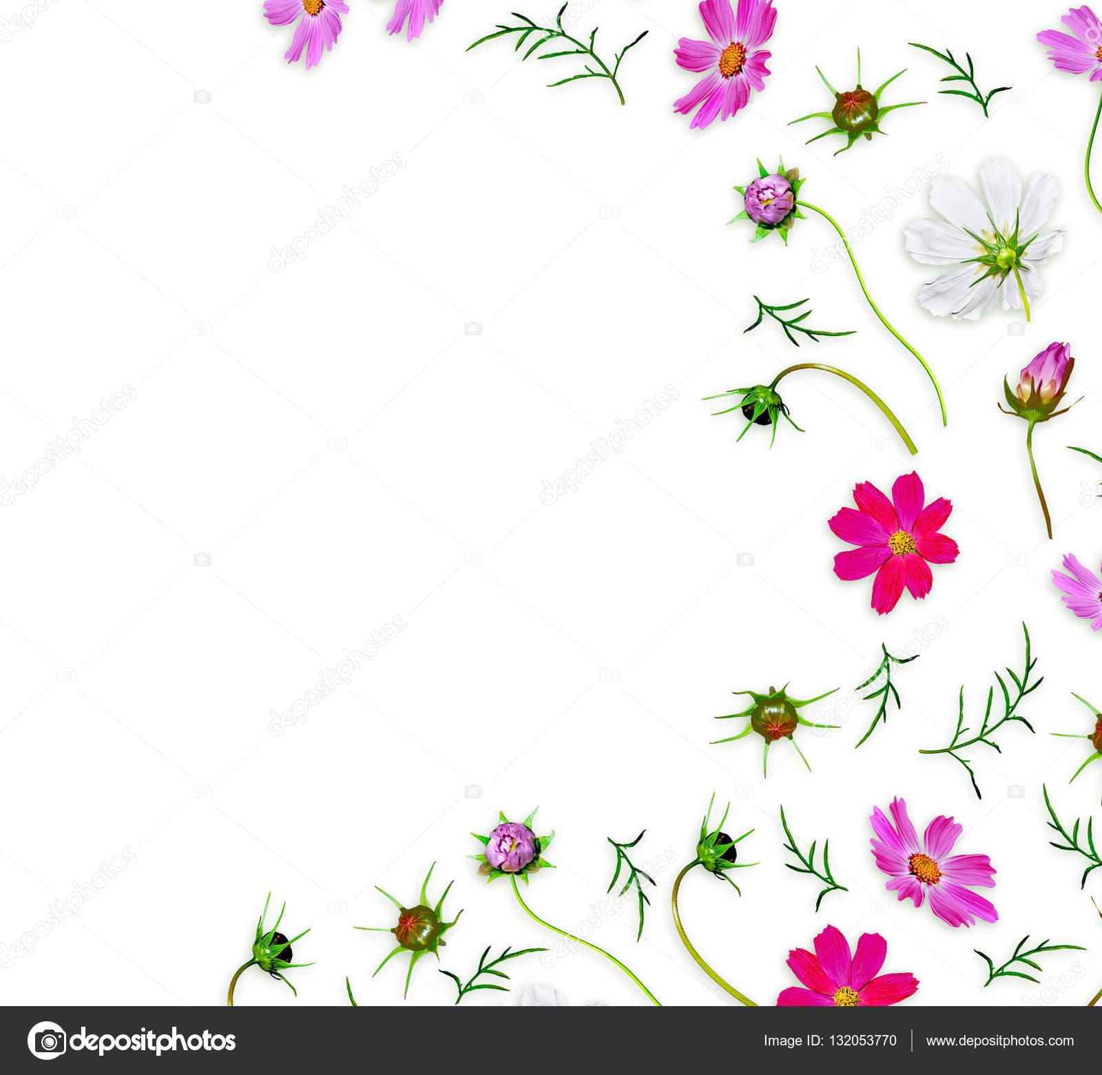 Fondo Blanco Con Flores Petunias Aislados Sobre Fondo Blanco