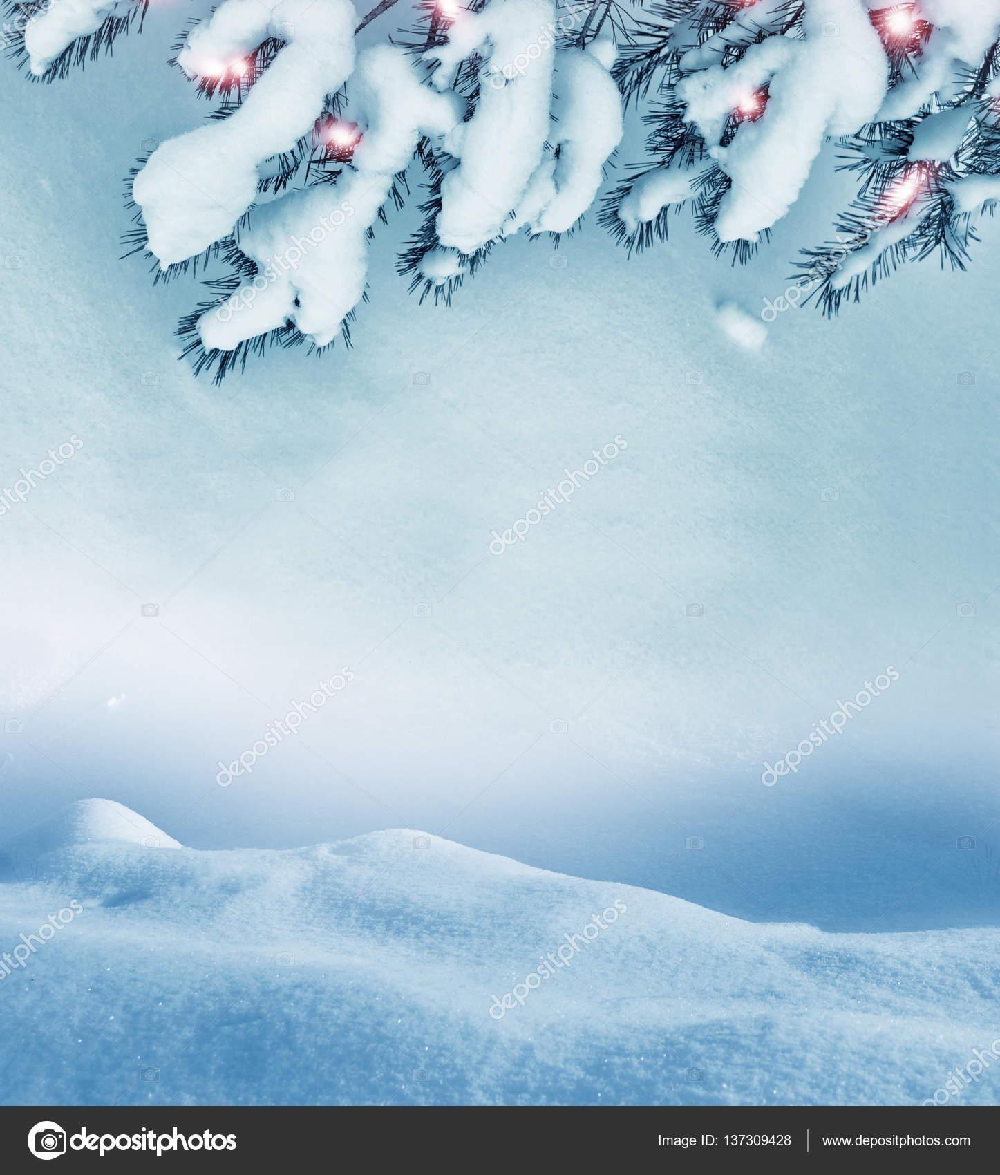 bosque en la helada. Paisaje de invierno. Árboles de la cubierta de ...