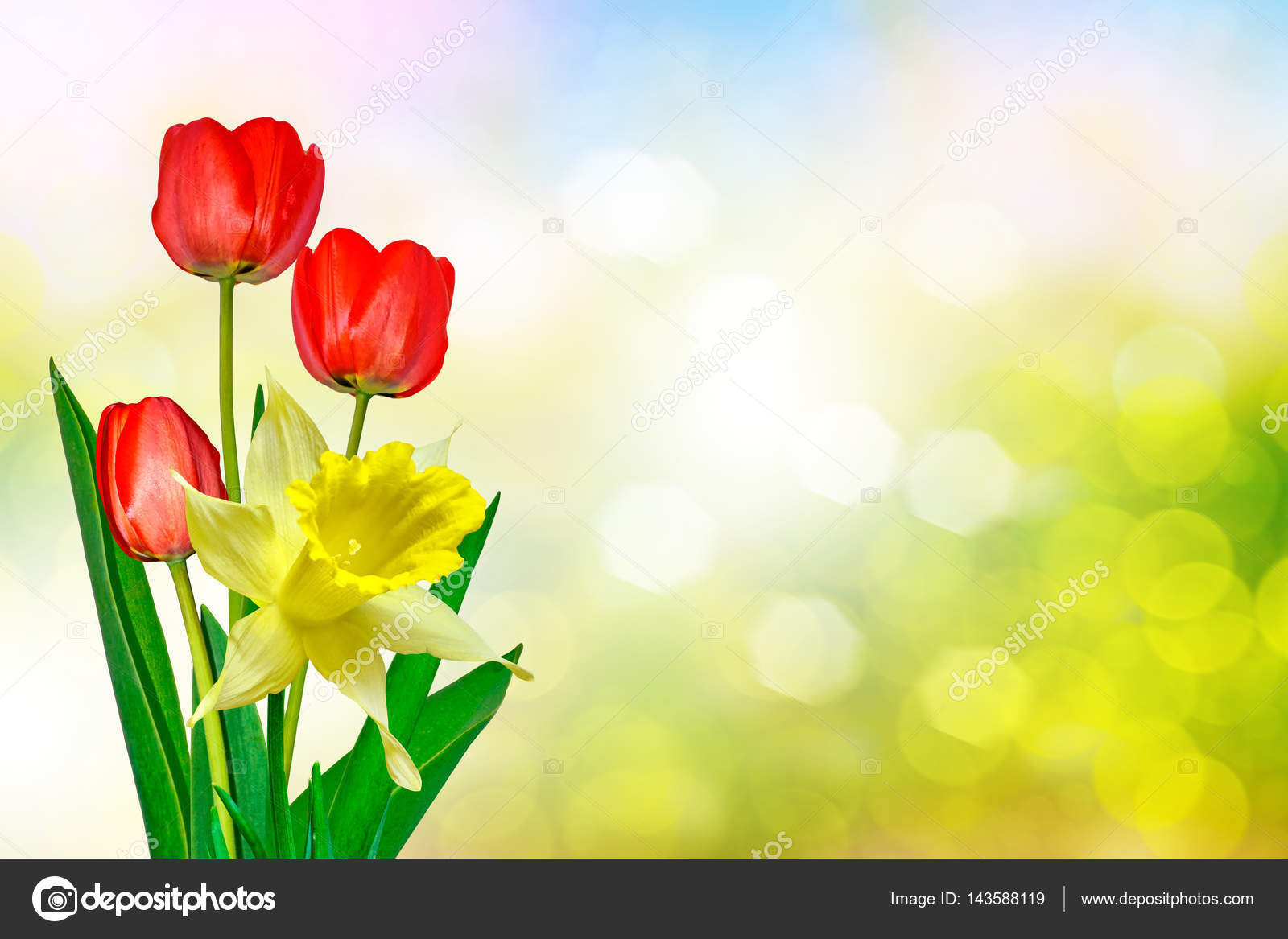 Bright And Colorful Spring Flowers Daffodils And Tulips Stock