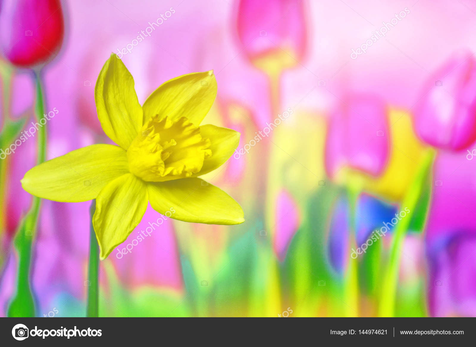 Bright and colorful spring flowers daffodils and tulips stock bright and colorful spring flowers daffodils and tulips photo by alenalihacheva mightylinksfo