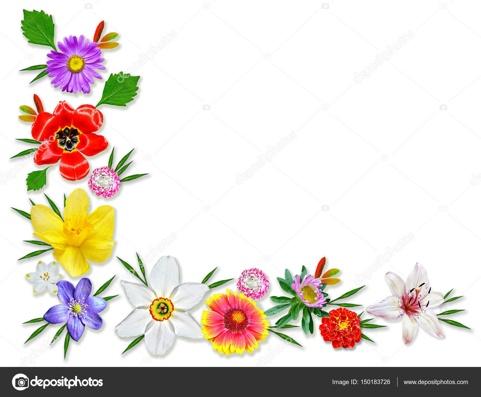 Frame Of Bright Spring Flowers Floral Background Stock Photo