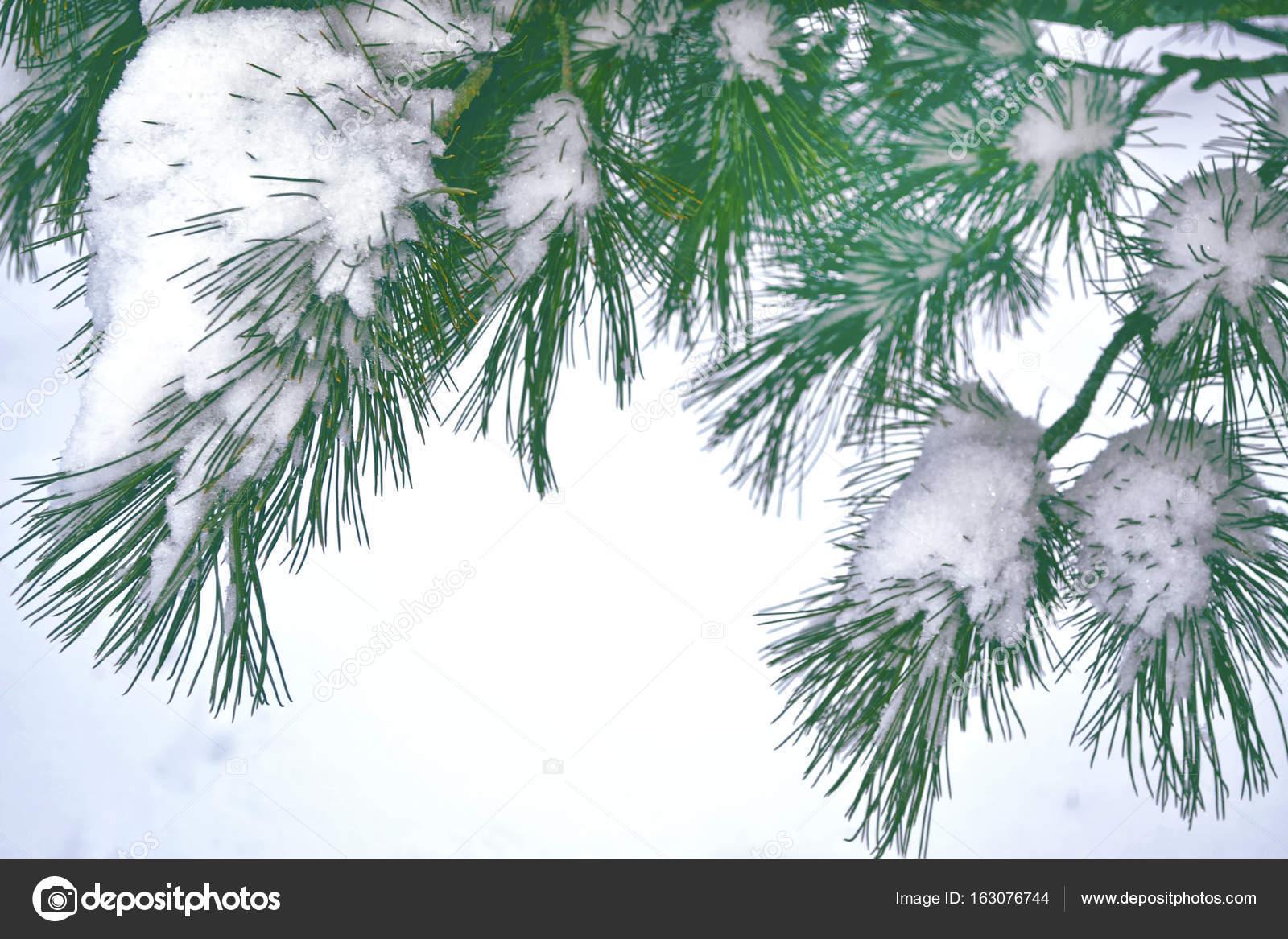Weihnachten der Hintergrund jedoch unscharf. Bäume im Schnee ...